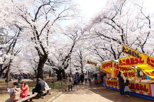 桜見 屋台